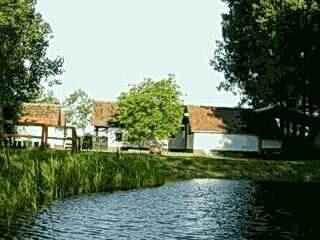 Természetes kerti tó